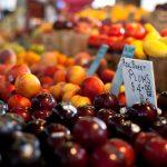 Materi dan Energi: Makanan dan Nutrisi