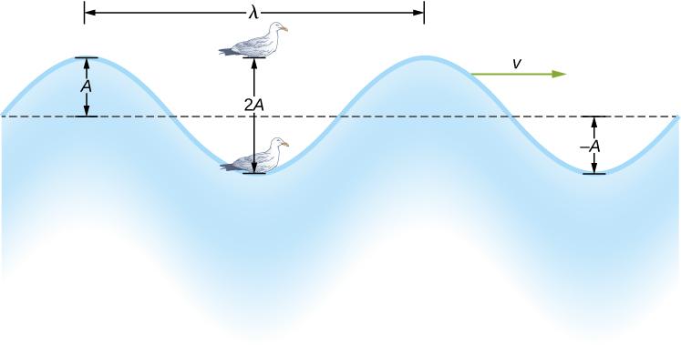 Beberapa Contoh Gelombang Transversal Dalam Kehidupan Sehari-hari