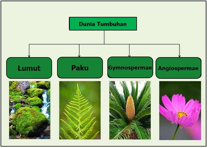Jenis Tumbuhan: Empat Klasifikasi Utama Tumbuhan